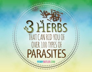 3 Herbs Parasite Cleanse
