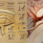 Pineal Gland Experiment [Food Diary Week 3]