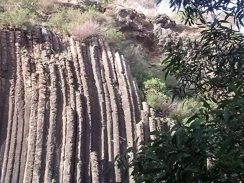 organpipes-clifftree