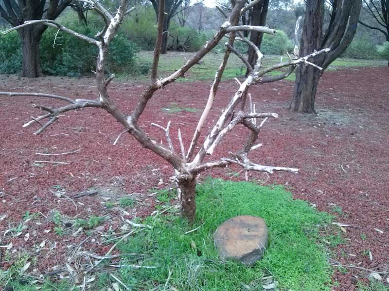 organpipes-deadtree