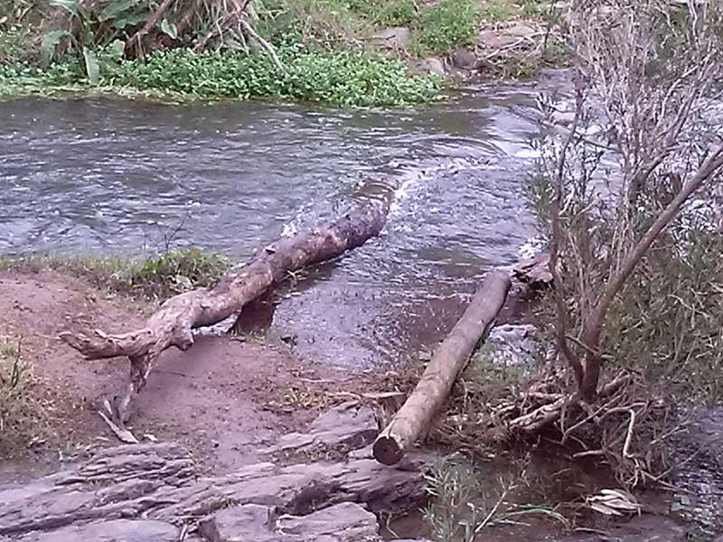 organpipes-river