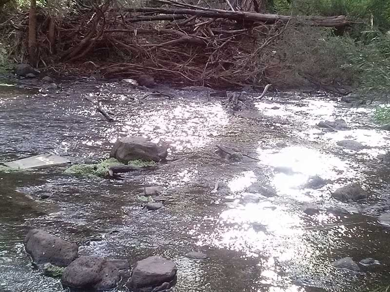 organpipes-river3