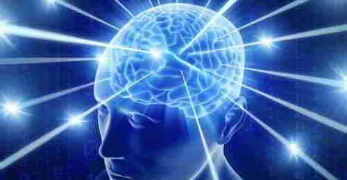 Study the Brain